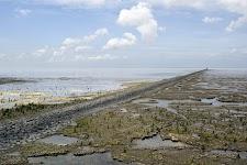 schorren langs een dijk in de Waddenzee