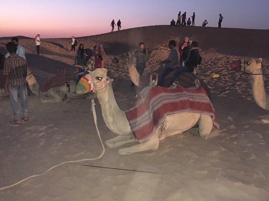 Лагерът с камилите