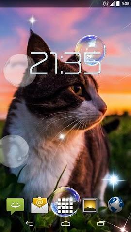 android Cute Cats HD Live Wallpaper Screenshot 1