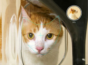 умная кормушка для кошек