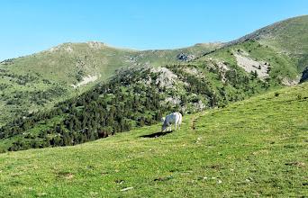 Photo: on monte direct vers le Costabona sur la crête de la Roca Blanca dels Soms