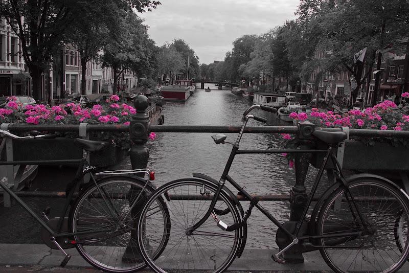 Le bici di Amsterdam di Maurzio Capolupo 57