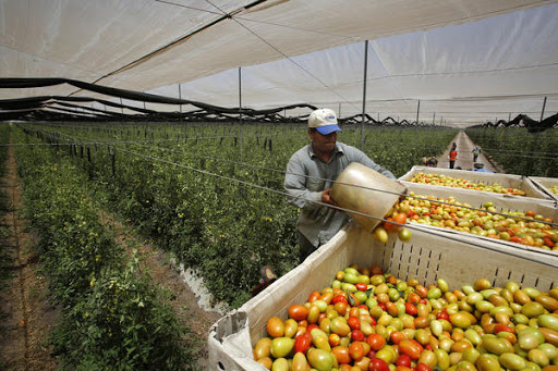 United Farm Workers union loses class action case to its own workers