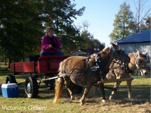 Koalah & Bell drive @ LP Painted Ponys
