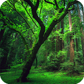 Amazon Forest Live Wallpaper