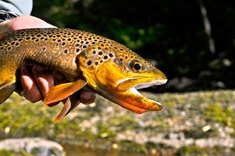 Photo: Savage River Brown