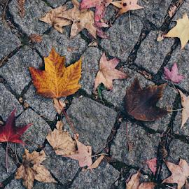 by Turgay Koca - Uncategorized All Uncategorized ( leaves texture, november, forest, concept, botany, pattern, dead, beautiful, fall, leaves, dry leaves, season, wood,  )