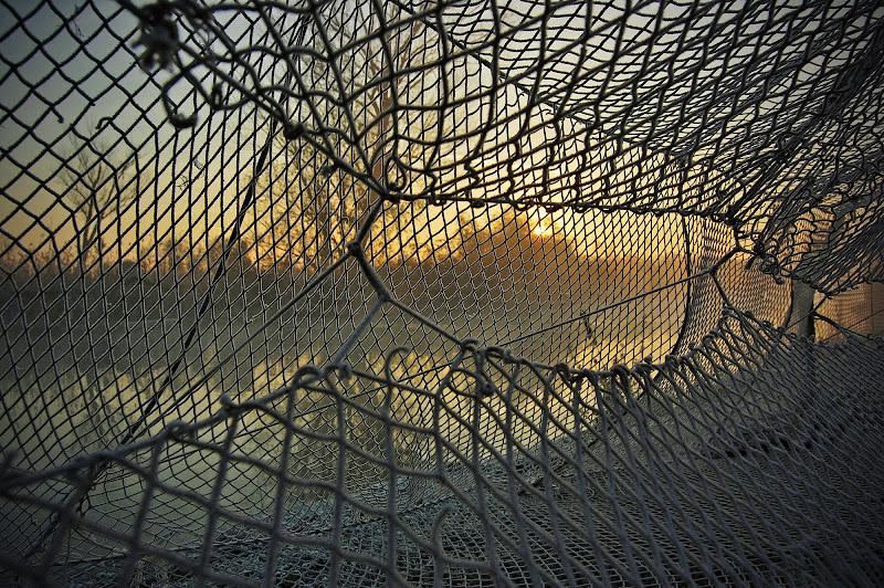 Attraverso la rete...l'alba. di Licia Piazza