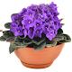 Комнатные растения apk