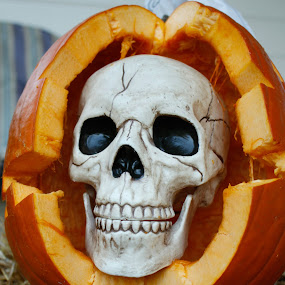 Skull Jack by Jill French - Public Holidays Halloween ( orange, skull, pumpkin white, jack o lantern, hay, halloween,  )