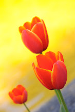 Photo: in living color :))) #breakfastclub #flowers #tulips #flowerphotography