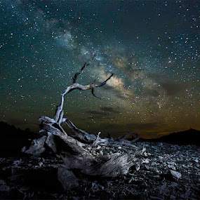 Dead Bristlecone pine and the milky way by Jerome Obille - Landscapes Starscapes ( driftwood, night photography, nightshot, white mountain, stars, long exposure, dead bristlecone pine and the milky way, jobille photography, evening, milky way )