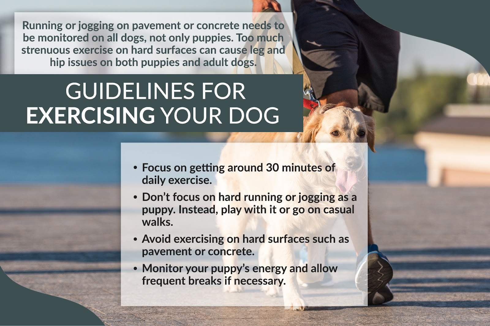guidelines for exercising your dog