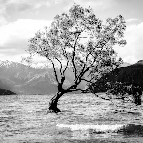 That tree by Perla Tortosa - Landscapes Waterscapes ( water, tree,  )