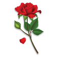Roses Sticker Packs - WAStickerApps icon