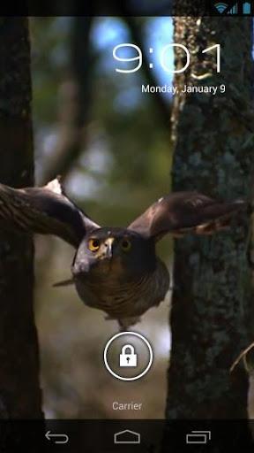 Hawk Attack Live Wallpaper