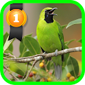Greater Green Leafbird icon