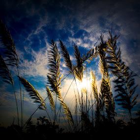 maa asche by Suman Sengupta - Nature Up Close Gardens & Produce ( canon, ssg, kolkata, suman, sengupta, sky, calcutta, motionstopper, rawshooter, sumansenguprta, india, durga puja, flower )