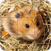Picture Puzzle: Hamsters
