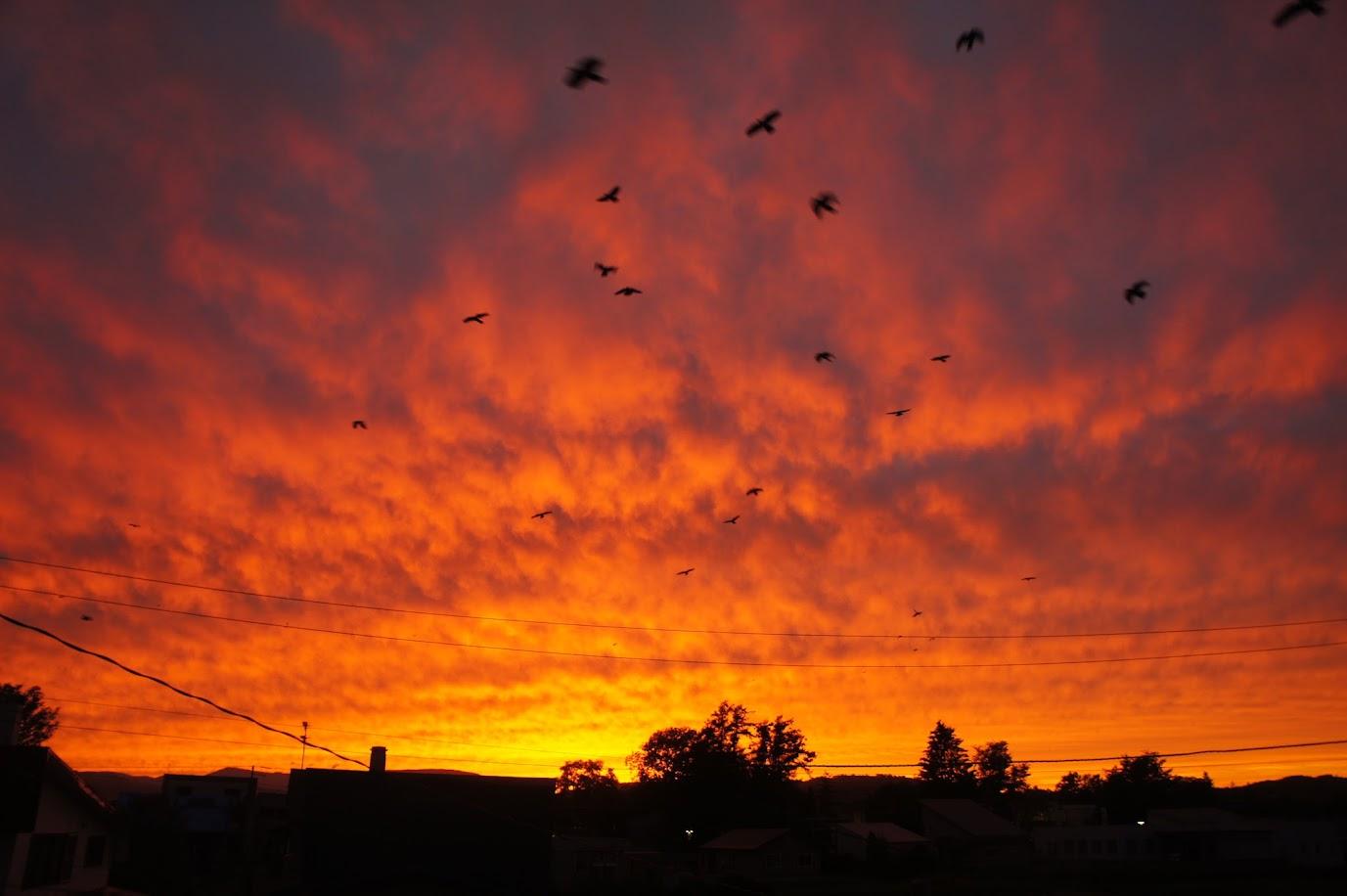 秋 燃える夕日
