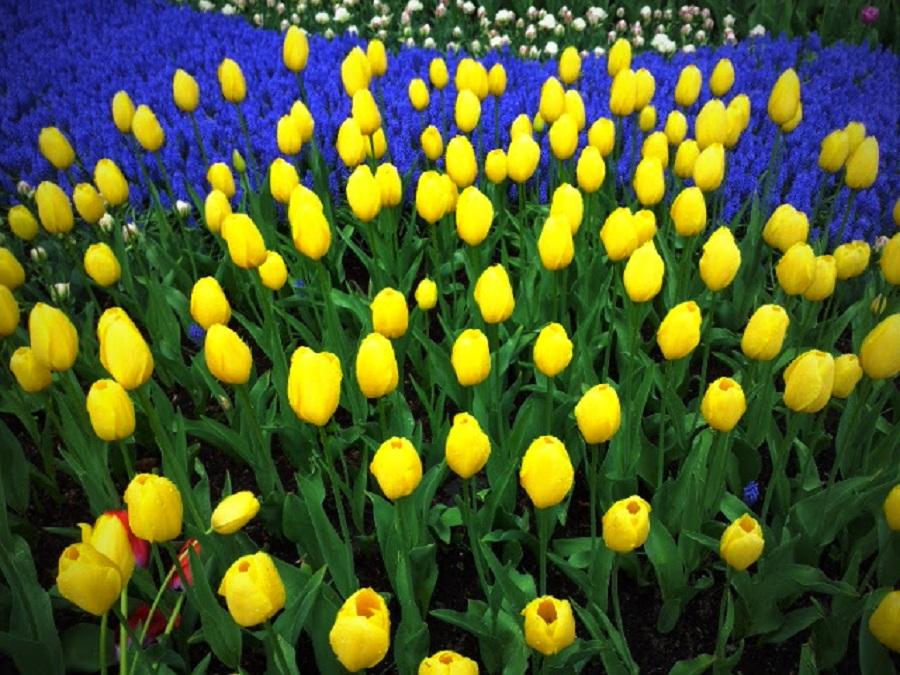 by Arpita Biswas - Flowers Flower Gardens (  )
