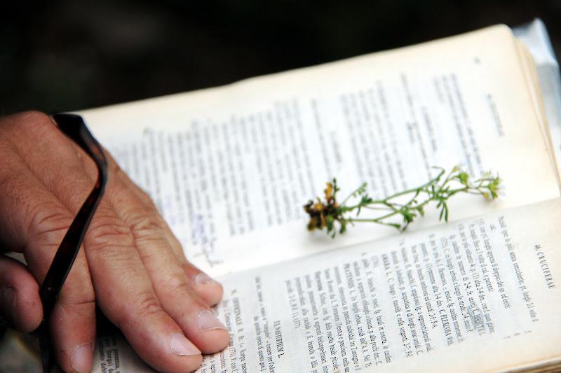 la mano del botanico di fmspino