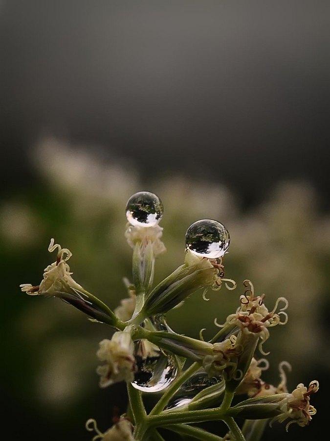by Danang Sujati - Nature Up Close Flowers - 2011-2013