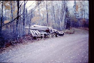 Photo: Logs