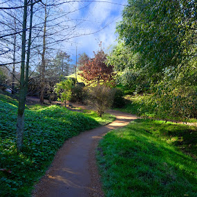 Way to HOBBITON HOUSE by Hendrik Cuaca - Landscapes Forests