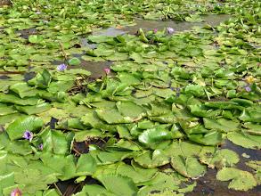 Photo: La Brea - Pitch Lake's surroundings