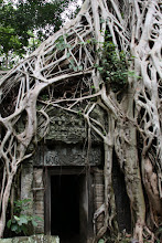 Photo: Year 2 Day 44 -  Fig Tree's Roots and Doorway in Ta Prohm