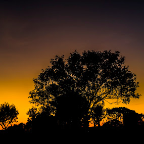 tree by Edu Marques - Landscapes Sunsets & Sunrises ( tree, silhouette, trees, yellow, landscapes, landscape, trails, photo, photography, photooftheday,  )