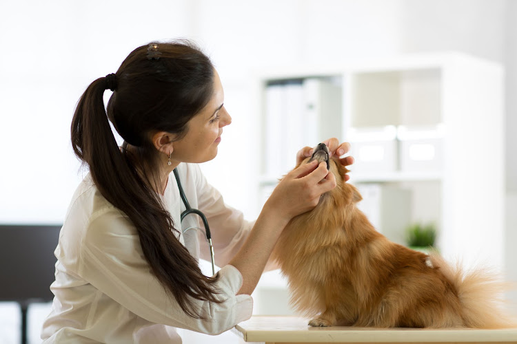 Consult Hills or your vet about the affected products with relevant batch numbers and if your pet is showing any of the symptoms listed. (File photo)