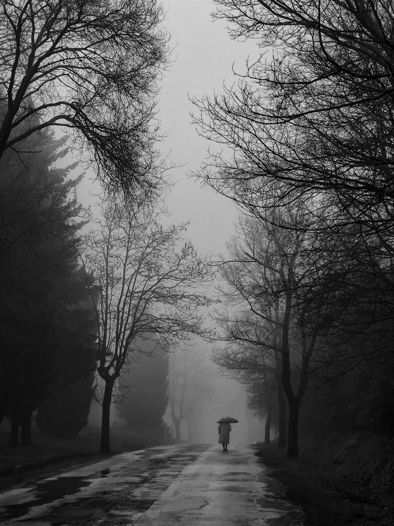 il viale di fabio_sartori
