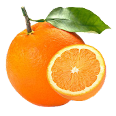 Pests and Diseases of Citrus
