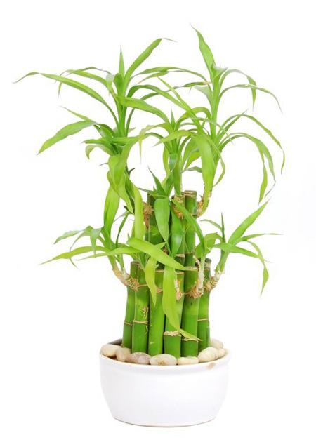 5 loại cây xanh tốt trong nhà thiếu sáng - 7Al4dH7MVlozrqAcgRuFNgDckB4gMd34GZdi0JT nr0=w450 h637 no