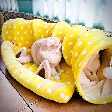 貓隧道連床仔