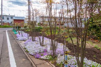 Photo: Ornamental roadside garden on the backstreets of Ōizumi, Ōra District, Gunma Prefecture. Read more about Oizumi: http://japanvisitor.blogspot.jp/2015/04/oizumibrazil-in-japan.html