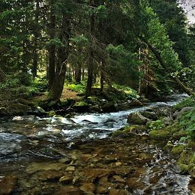 Horsky potok by Ján Hrmo - Landscapes Forests ( leto, slnko, potok, les, trava, stromy, voda )