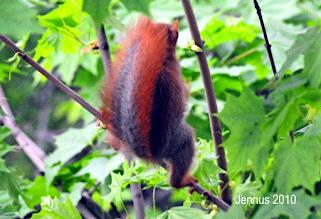 Photo: Eichhörnchen