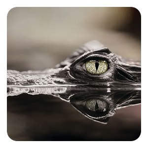 download Crocodile Live Wallpaper apk