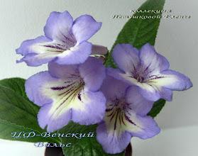Photo: ЦФ-Венский Вальс