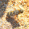 Villa Bee Fly