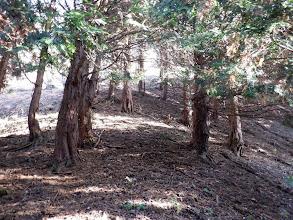 桜峠からの尾根と合流