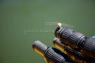 Photo: Dragonfly on tripod