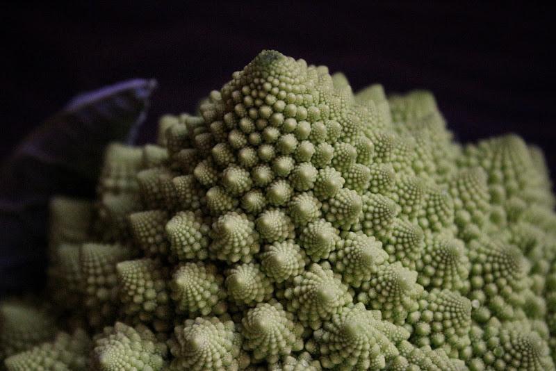 Il Broccolo di Fibonacci  di Zafs_77