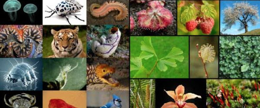 Nature and Our Planet Talk Series with Antoine – Exotic species in nature