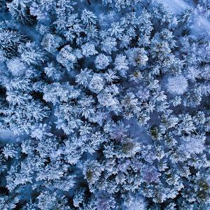 frosen forest.jpg