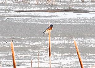 Photo: Bluebird, 2.18.11