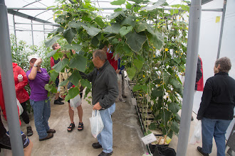 Photo: at the UF hydroponic research facility